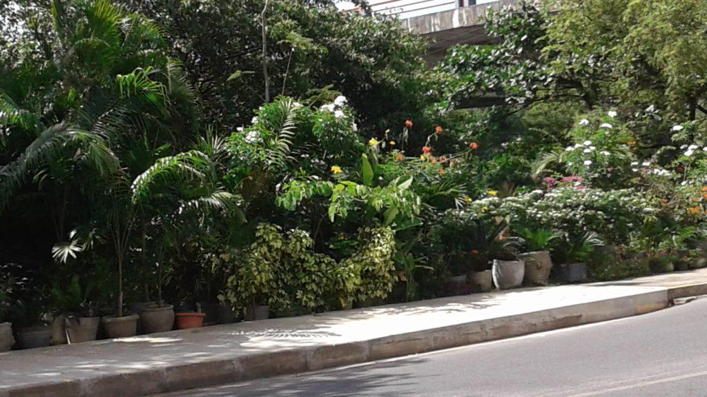 Adoro caminhar por essa calçada, vendo essas plantinhas.