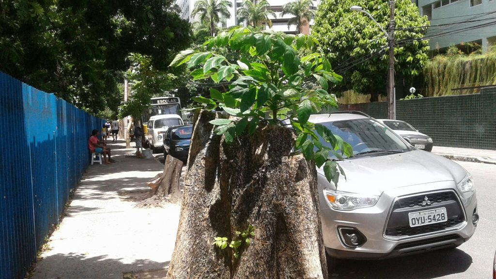 Em apenas uma calçada, na Rua do Futuro, cortes radicais deixaram as árvores como tocos.