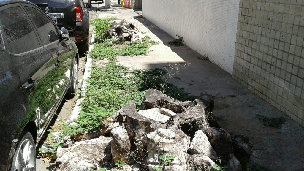 Cemitério de árvores na Rua Joseph Turton, no bairro da Tamarineira.