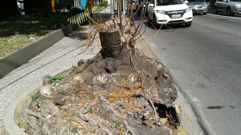 A violência contra a planta foi tão grande, que as folhas que brotaram terminaram por secar. Hoje tiraram tudo, só ficou o pó de serra.