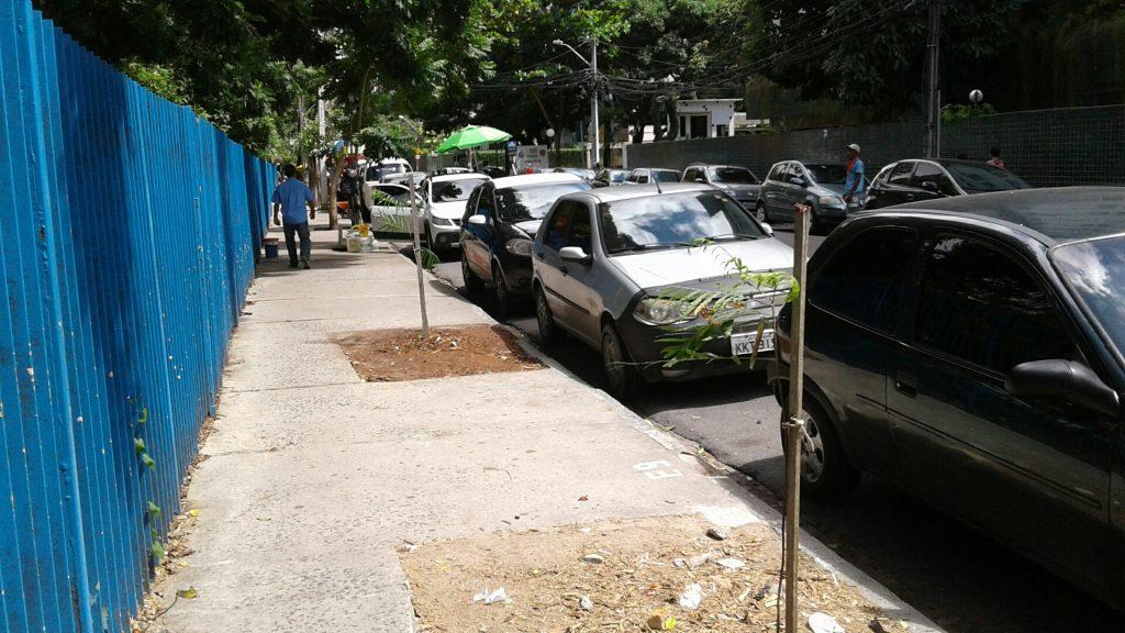 """Prefeitura começa a substituir toquinhos de árvores """"assassinadas"""" com mudas de sobrevivência duvidosa."""