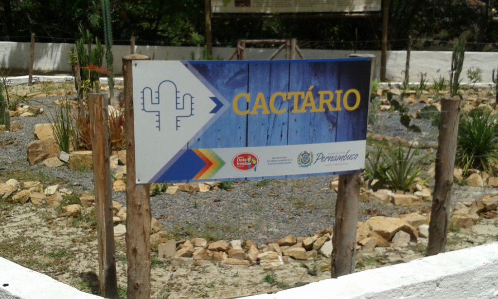 Localizado na área do Zoobotânico de Dois Irmãos, o Cactário abriga 30 espécies nativas da caatinga.