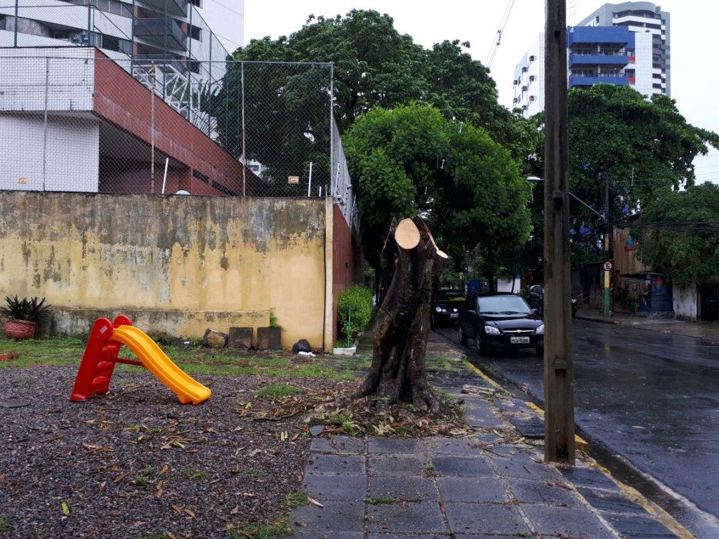 Autor dessa foto, Benedito diz que árvores mutiladas são a regra no caminho para o trabalho.