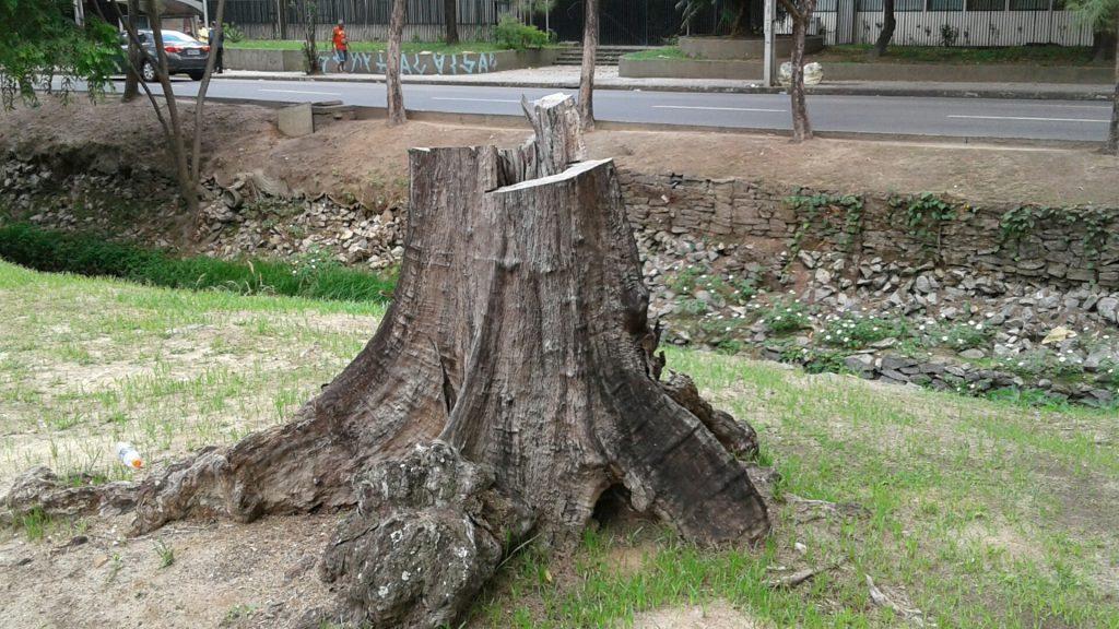 Árvore em frente ao Shopping Parnamirim foi mutilada, morreu e não teve direito a uma muda substituta.