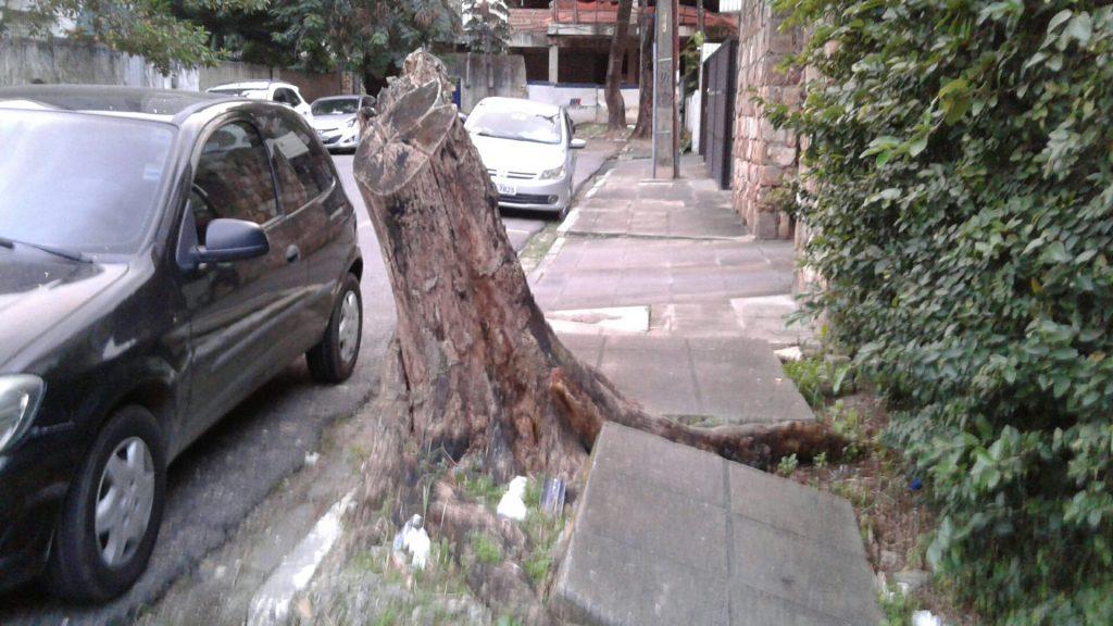 """Respondam rapidinho: o """"assassinato"""" dessa árvore melhorou em quê, a mobilidade nessa calçada?"""